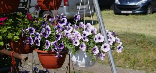 Sajam cvijeća 2012